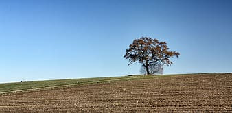 Brown tree on brown field under blue sky during daytime