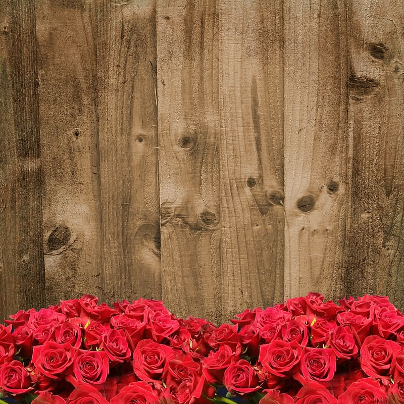 View of red roses behind brown plank