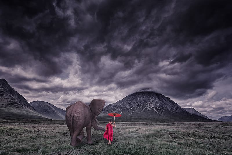 Elephant on green grass field painting