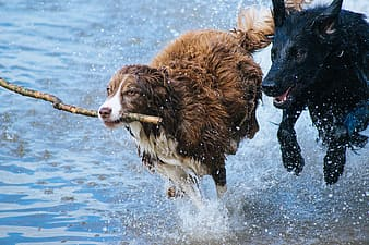 Brown and black short coated dog on water during daytime
