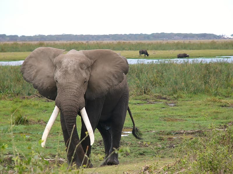 Gray elephant on grass during daytime