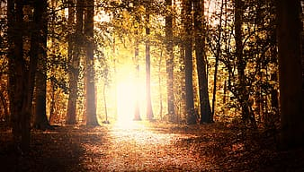 Brown trees with sun rays