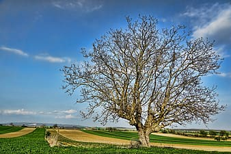 Brown bare tree on green grass field