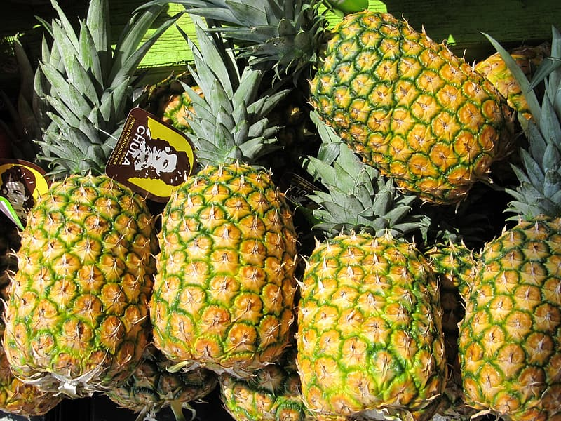 Several pineapple fruits