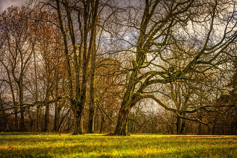 Brown leafless tree on green grass field during daytime