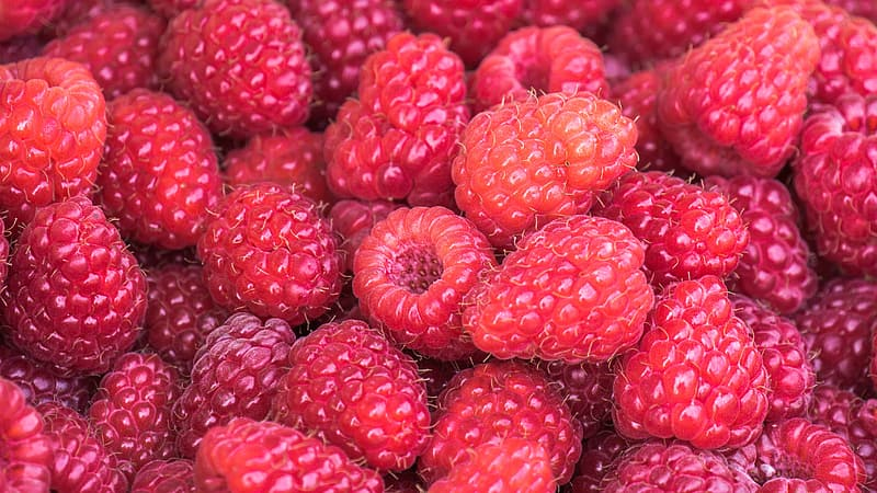 Red raspberry fruits in close up photography
