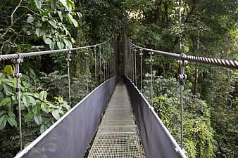Photo of gray and black hanging bridge near green trees