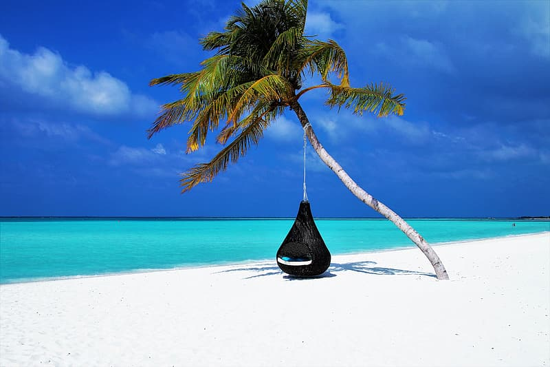 Black hammock under coconut tree on seashore