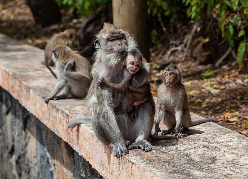 Two monkeys sitting on brown tree branch during daytime