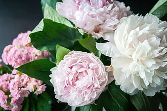 Close-up photography of pink and white petalad flowers