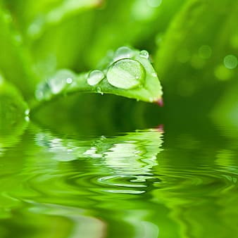 Green leaf plant with dew drop on body of water