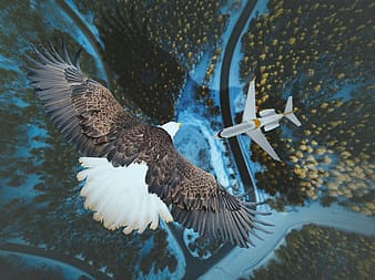 Brown and white eagle flying above white airplane aerial photography