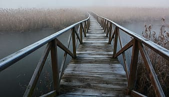 Photo of boardwalk along body of water