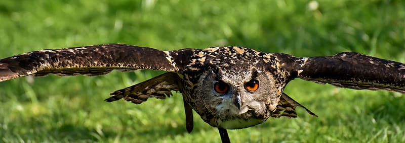 Focus photo of black and brown owl