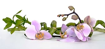 Purple orchid flower and lucky bamboo plant