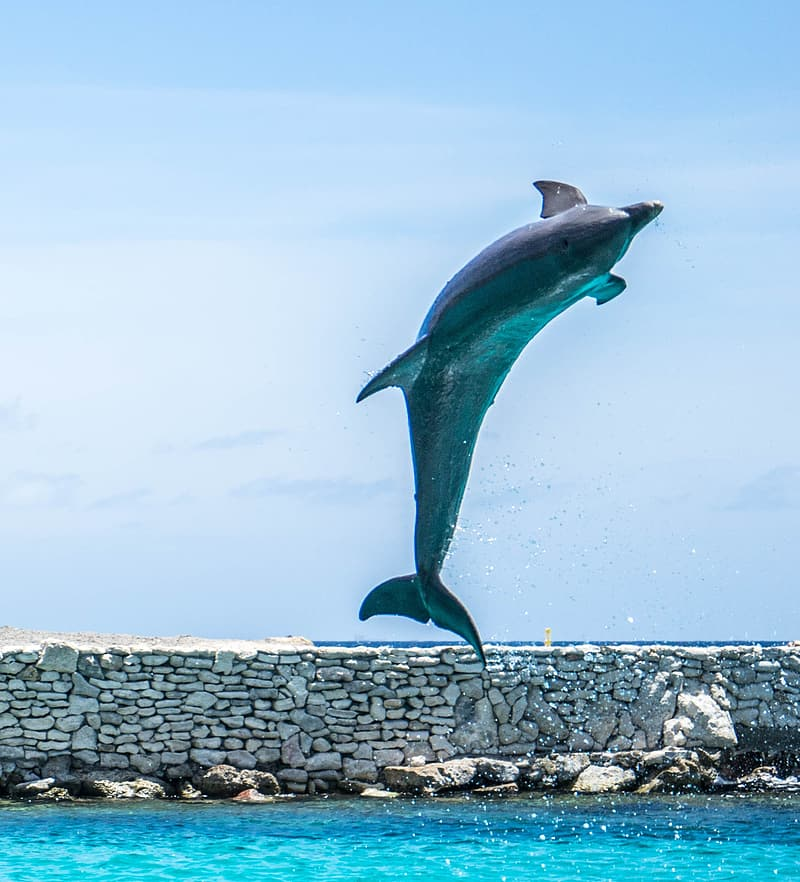 Dolphin on the sea photo during daytime
