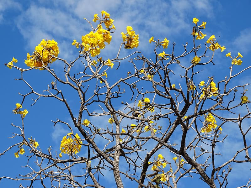 Yellow flowers on brown tree branch during daytime