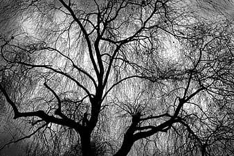 Grayscale photo of leafless trees