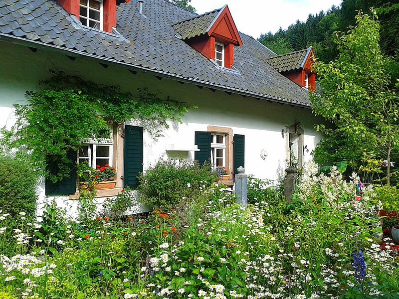 2-storey house surrounded with white petaled flowers