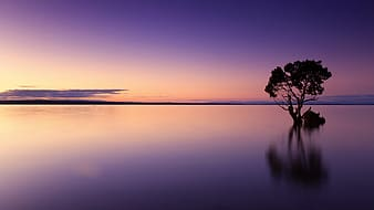 Silhouette photo of tree on body of water