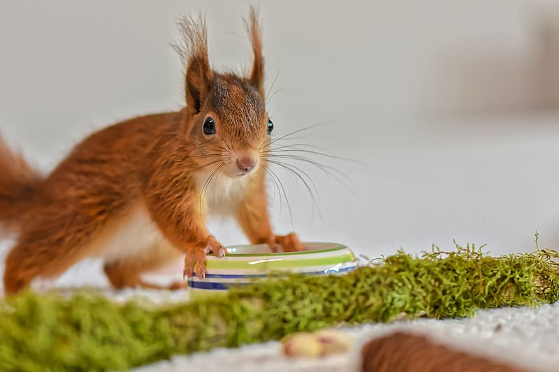 Brown squirrel on green and white textile
