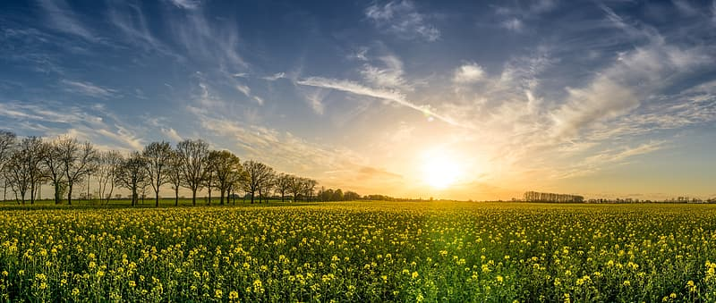 Photography of grassland during sunset
