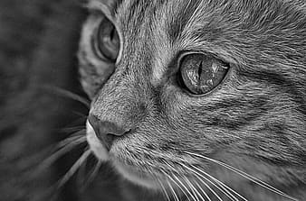 Grayscale photo of cats face