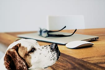 Dog beside wooden table
