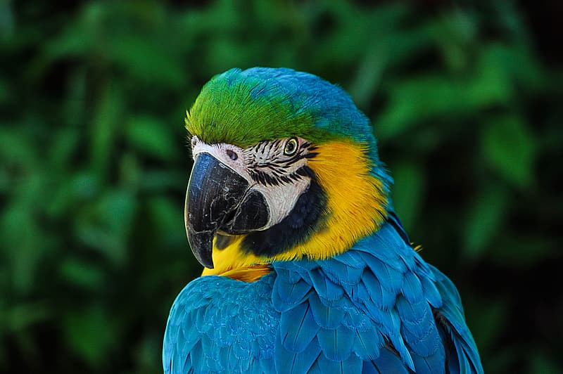 Focus photography blue-and-yellow macaw