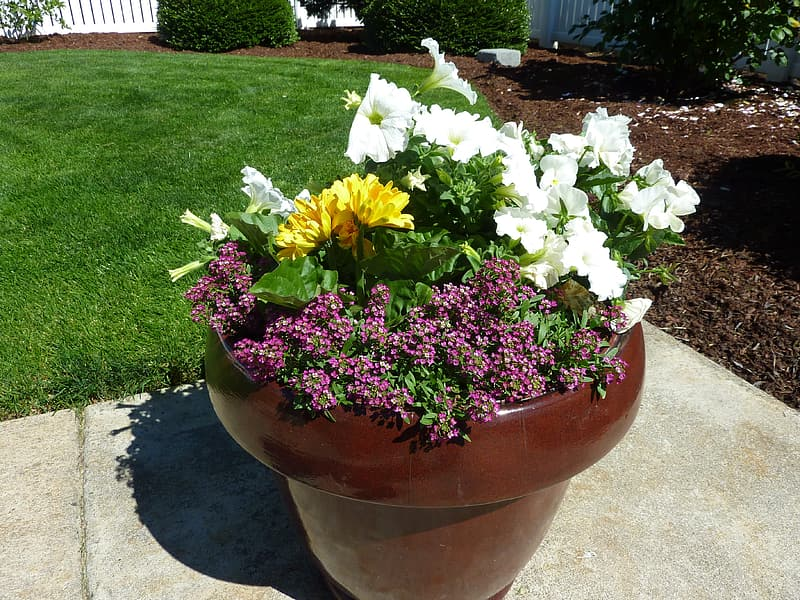 White and yellow flowers in brown clay pot