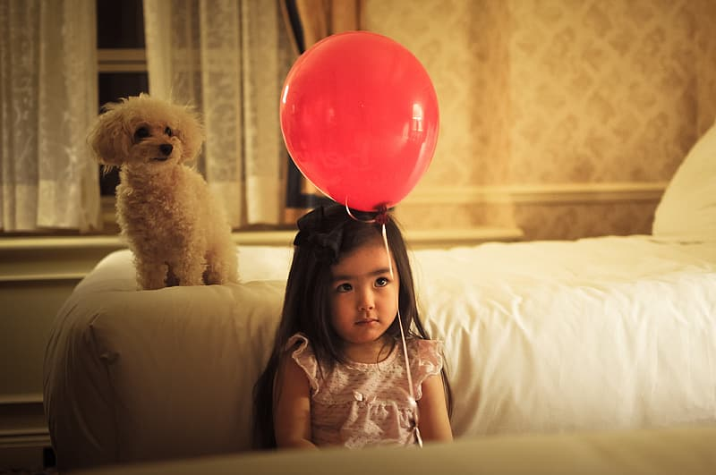 Girl with red balloon beside a white poodle on bedroom
