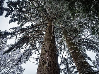 Low angle photo of trees