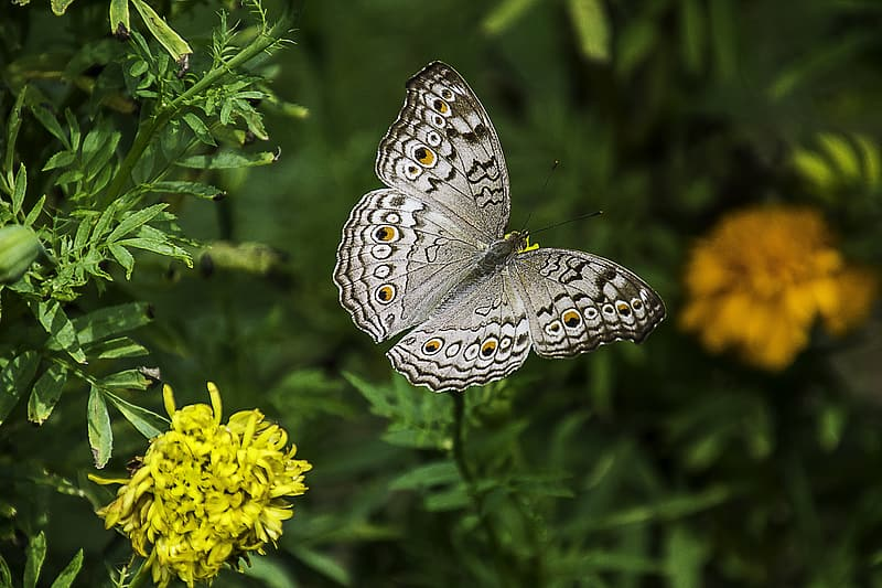 Shallow focus photography of white and gray butterfly