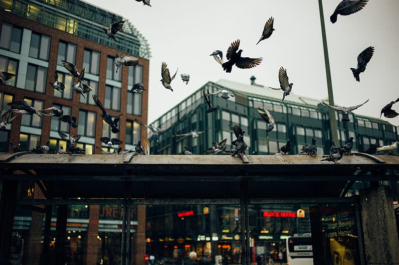 Flock of black and white bird flying near the concrete building at daytime