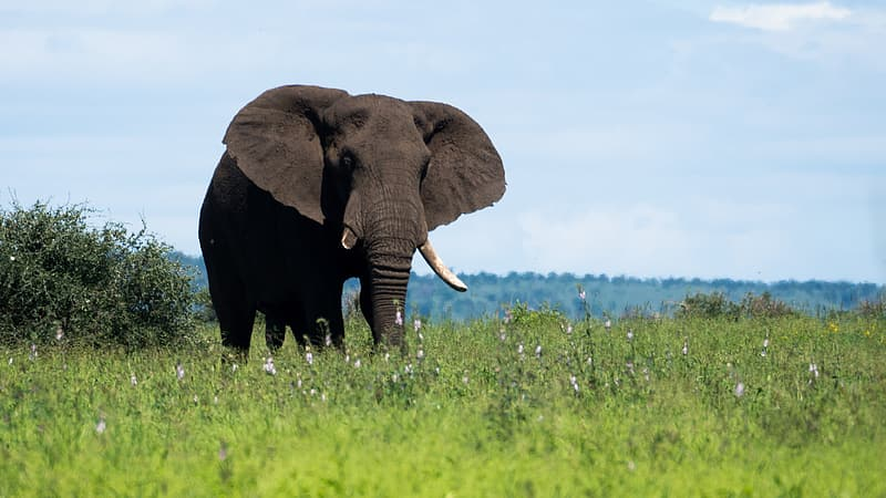 Brown elephant standing on grass fields during daytime