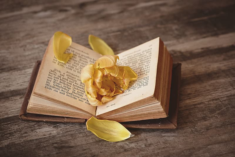 Opened book with flower petals