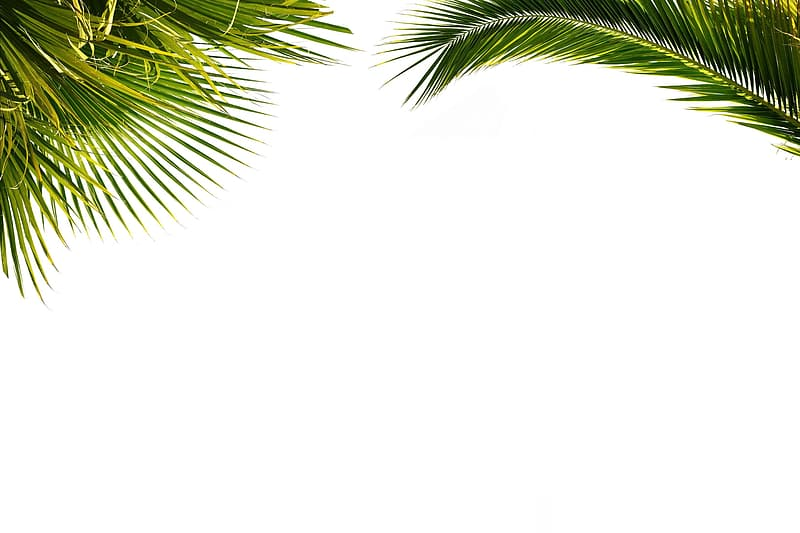 Green palm tree leaves on white background