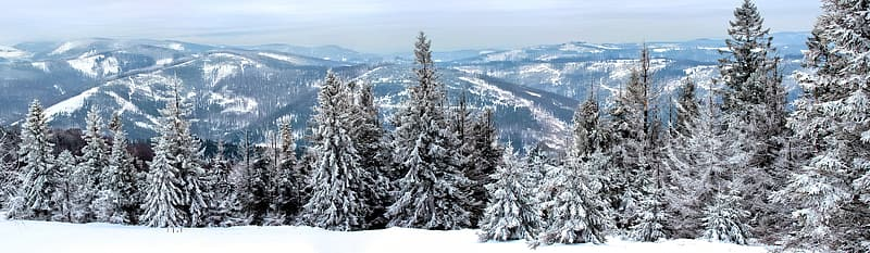 Snow covered green trees photo