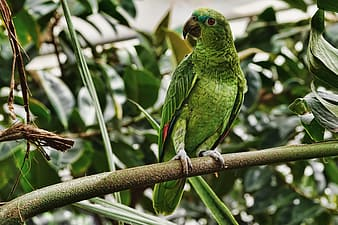 Green parrot perched on green tree branch