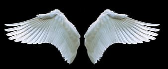 Two white wings