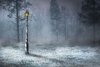 Lamp post in forest