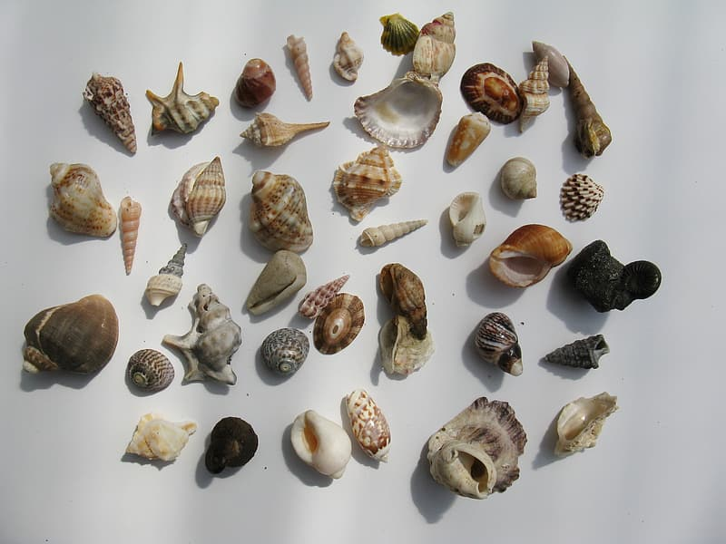 Assorted-color seashells