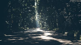 Person standing in middle of asphalt road surrounded by trees