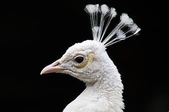 White and black feathered bird