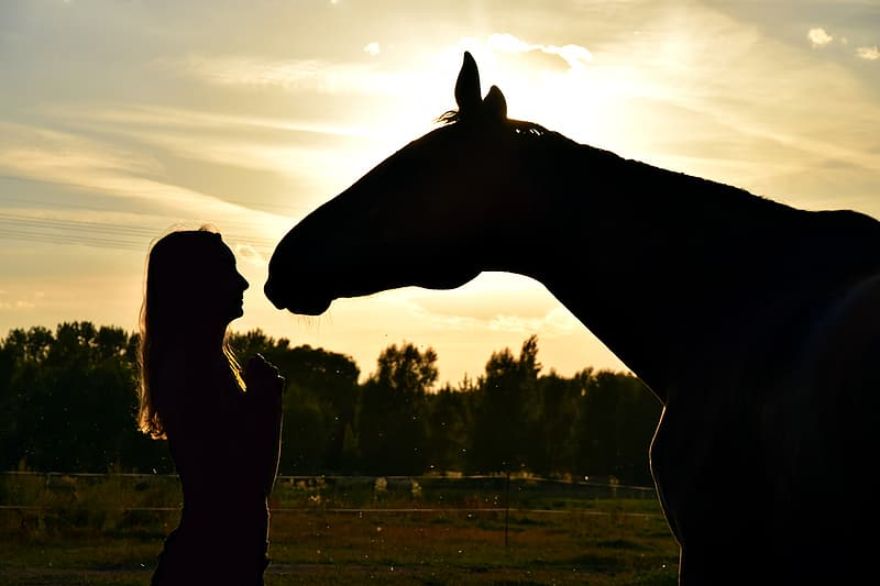 Silhouette view of a woman infront of a horse face