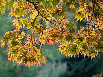 Yellow and green leaves during daytime
