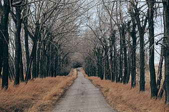 Gray concrete road between bare trees during daytime