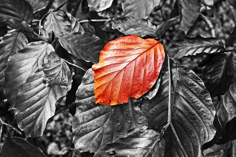 Brown and green leaves in grayscale photography