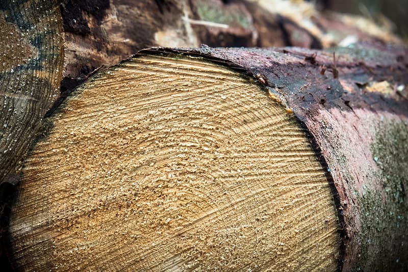 Brown and red wood log