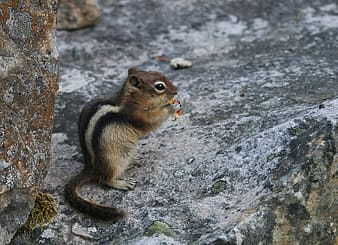 Squirrel holding seed